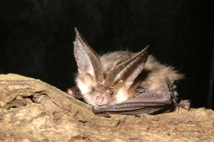 Bat eDNA testing, eDNA testing kits, Testing for other species, protected species